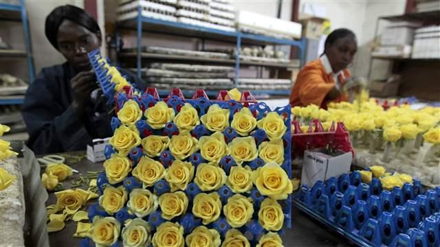 africa business flowers