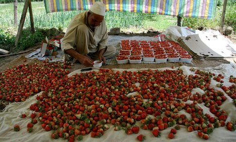 africa business strawberries