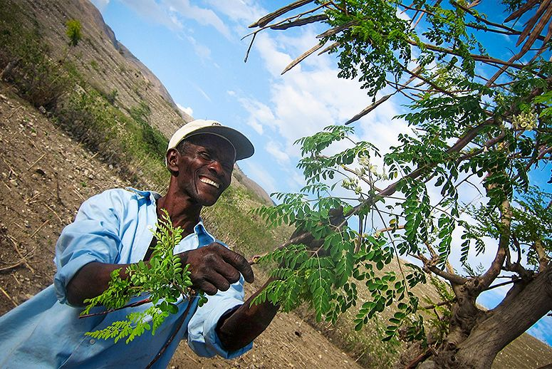 How To Start A Profitable Business In Africa With This Plant